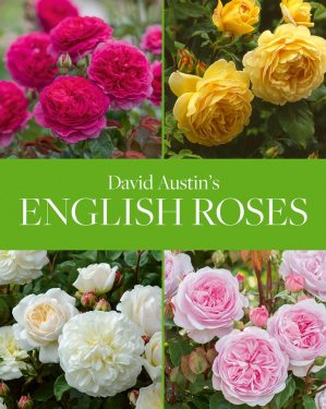 David Austin's English Roses (2020)