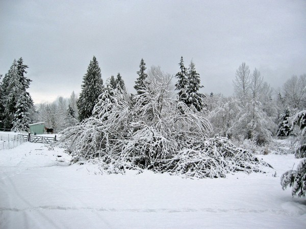 Woodhouse weather2, Seattle snow storm (2008)