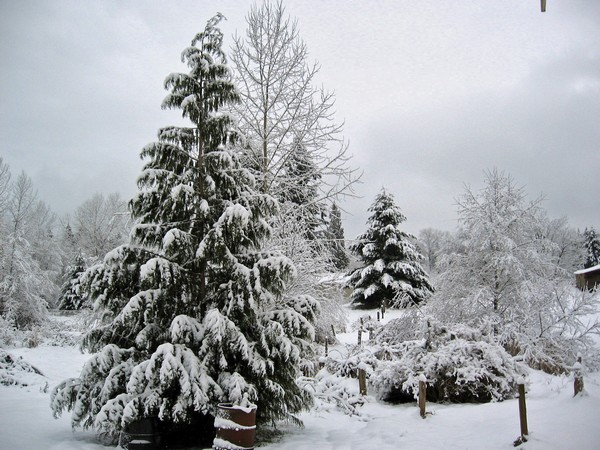 Woodhouse weather3, Seattle snow storm (2008)