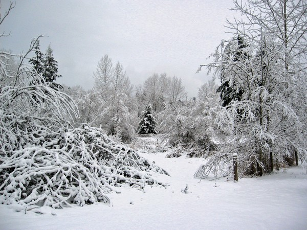 Woodhouse weather4, Seattle snow storm (2008)
