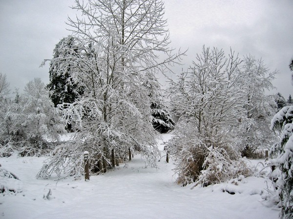 Woodhouse weather5, Seattle snow storm (2008)