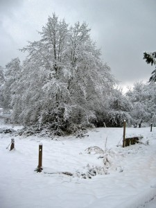 Woodhouse weather6, Seattle snow storm (2008)