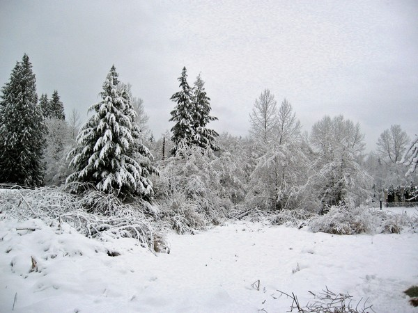 Woodhouse weather1, Seattle snow storm (2008)