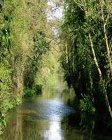 Stour River near Godmersham Park, Kent, England