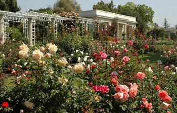The Huntington Library and Gardens Rose Garden