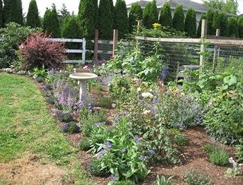 Woodston Cottage garden mixed border summer (2012)