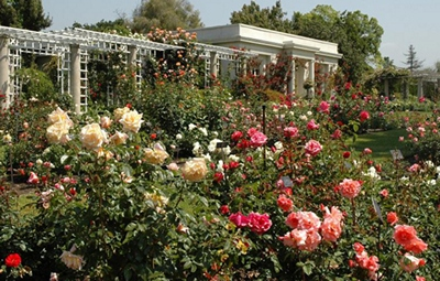 Image of the rose garden @ 2013 The Huntington Library and Gardens