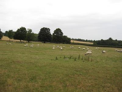 Jane Austen Tour 2013 Kent countryside