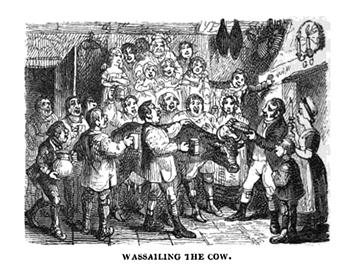 wassailng cow  x 350